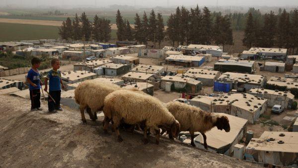 https://wbhm.org/wp-content/uploads/2016/01/npr-sheep-refugees-600x338.jpg
