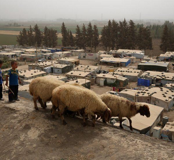 https://wbhm.org/wp-content/uploads/2016/01/npr-sheep-refugees-600x553.jpg