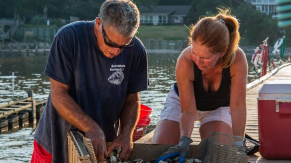 Changing Climate: In Pursuit of the Disappearing Alabama Oyster. Will They Ever Return?